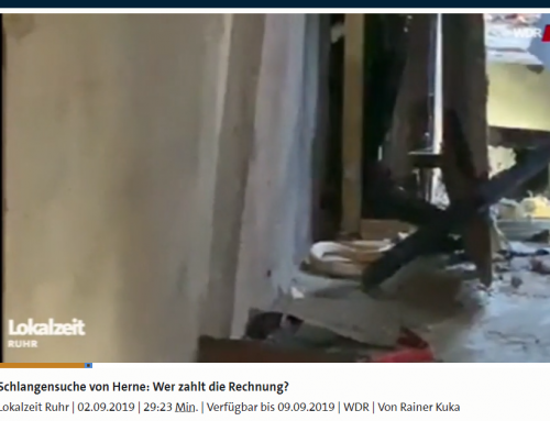 2.9. Sat.1, WDR Interviews zu Kosten der Kobrasuche von Herne. Wer muss zahlen, RA Kempgens im Interview.